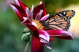 Пеперутка и цвет | МОЈ ПОРТАЛ